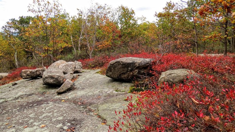 Vibrant Autumn reds alongside some glacial erratics in Norvin Green State Forest