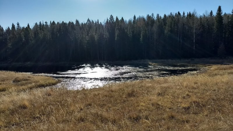 Small pond towards the end of the loop
