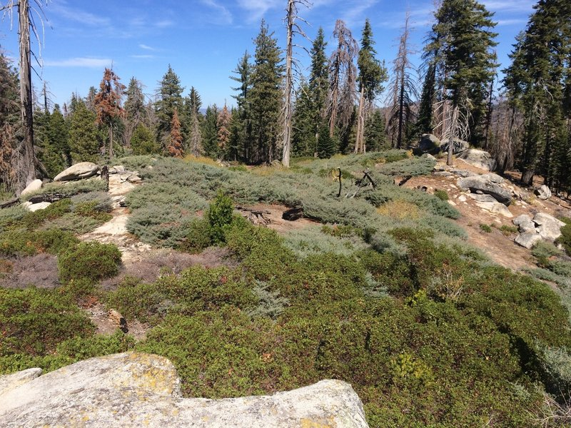 No giant sequoias here but trail wanders through brush, open forest and past massive boulders.
