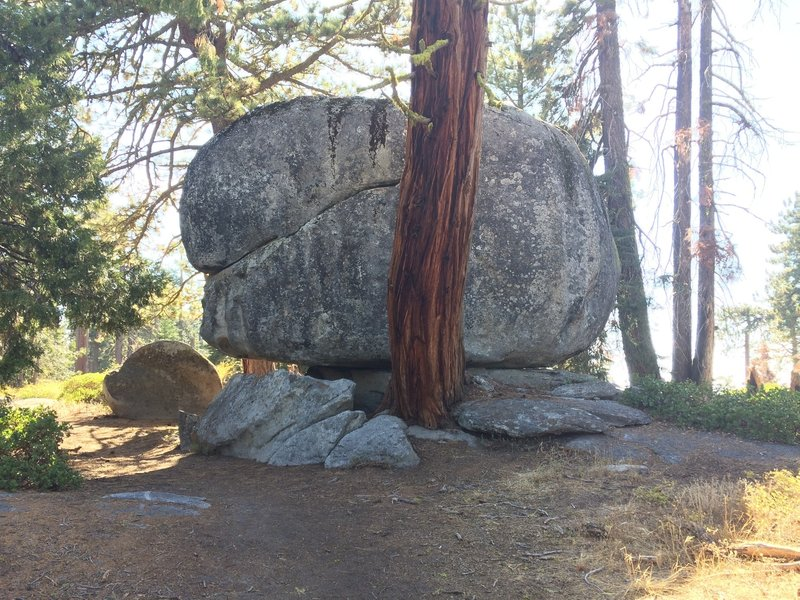 Boulder and tree with a close relationship