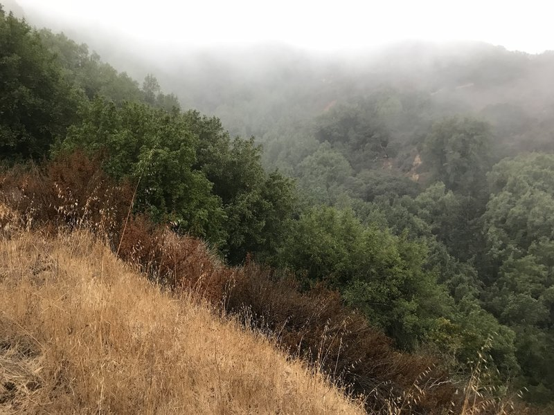Morning fog in the mountains.
