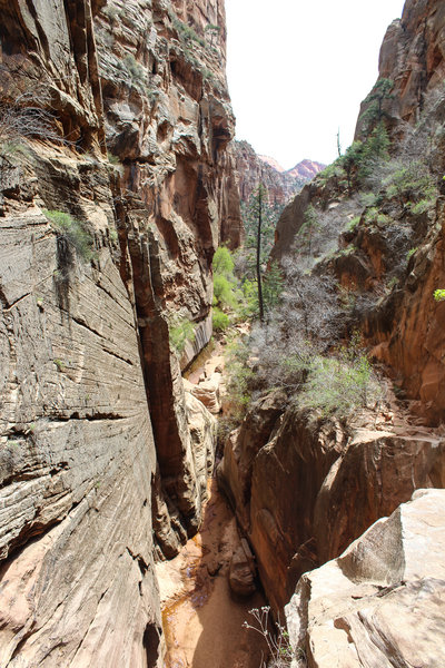 Looking back down the extremely steep and narrow trail up Water Canyon.