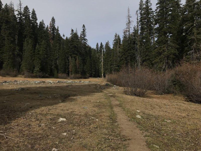 Meadow on Trail Gulch Trail