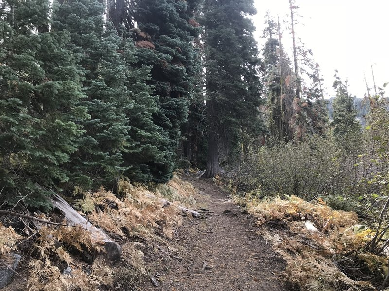 Trail Gulch Lake Spur Trail in Trinity Alps Wilderness