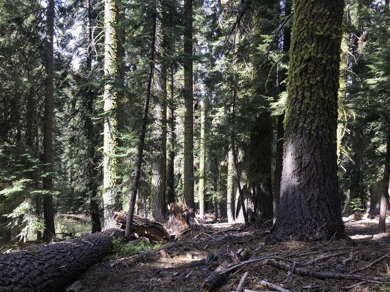 Trail Gulch Trail in Trinity Alps Wilderness.