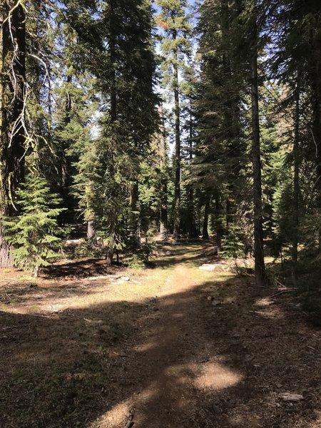 Trail Gulch Trail in Trinity Alps Wilderness
