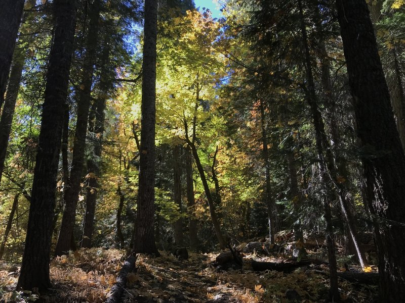Fall on Canyon Creek Trail in Marble Mountain Wilderness.