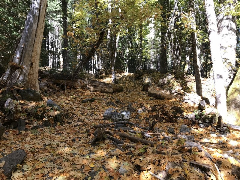 Fall on Canyon Creek Trail in Marble Mountain Wilderness