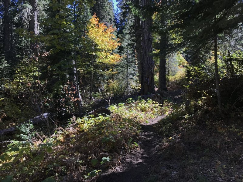 Canyon Creek Trail in Marble Mountain Wilderness