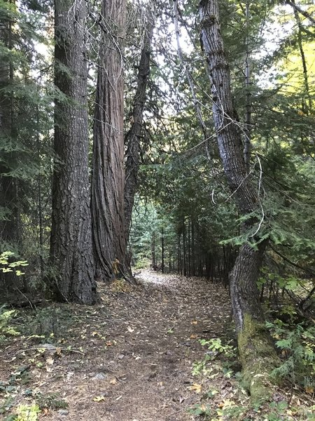 Canyon Creek Trail in Marble Mountain Wilderness.