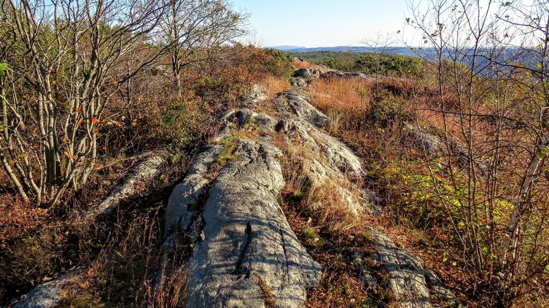 A particularly enjoyable section of the Appalachian Trail in southern NY State.
