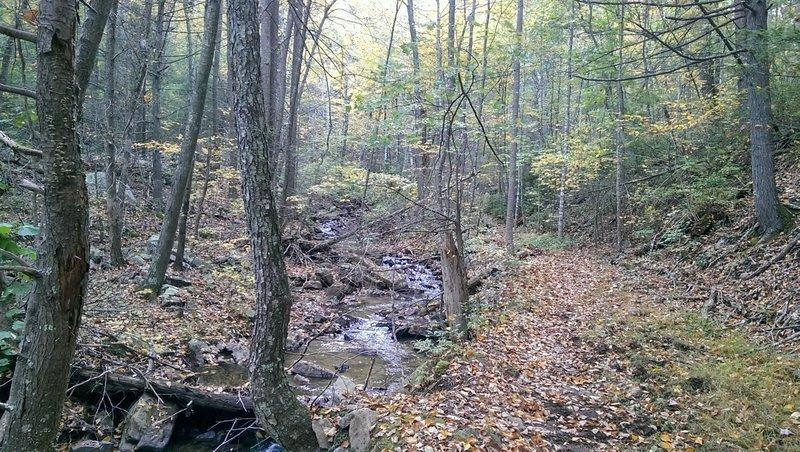 Mudhole Gap Trail in the fall.