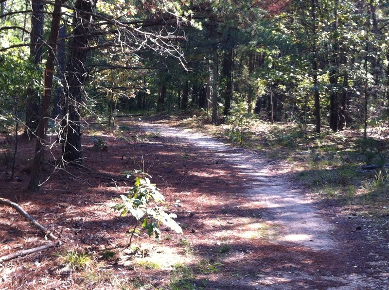 Cedarville State Forest doubletrack.