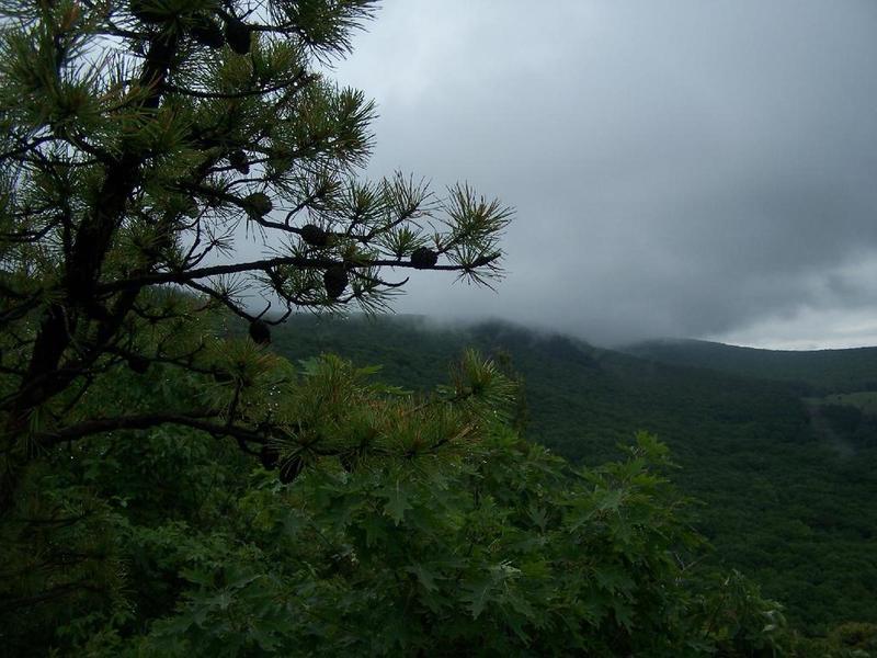 Fog on Bash Bish Mountain.