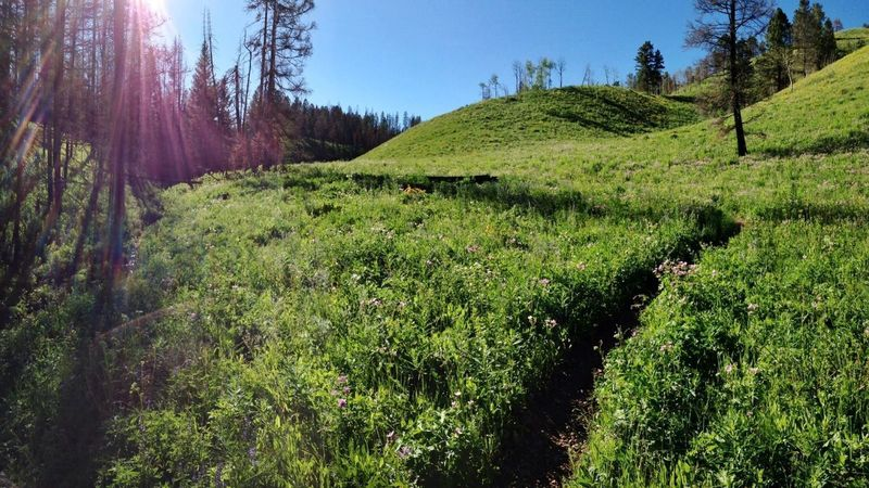 Looking north on West Game Creek Trail. Photos don't do it justice! Fantastic trail.