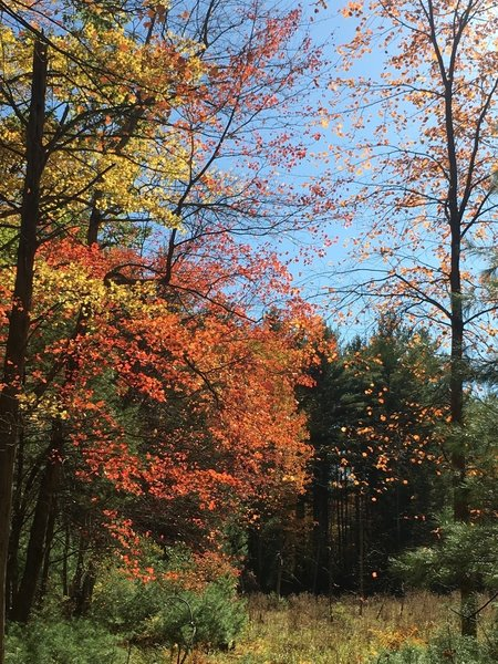 Beautiful fall colors on the trail