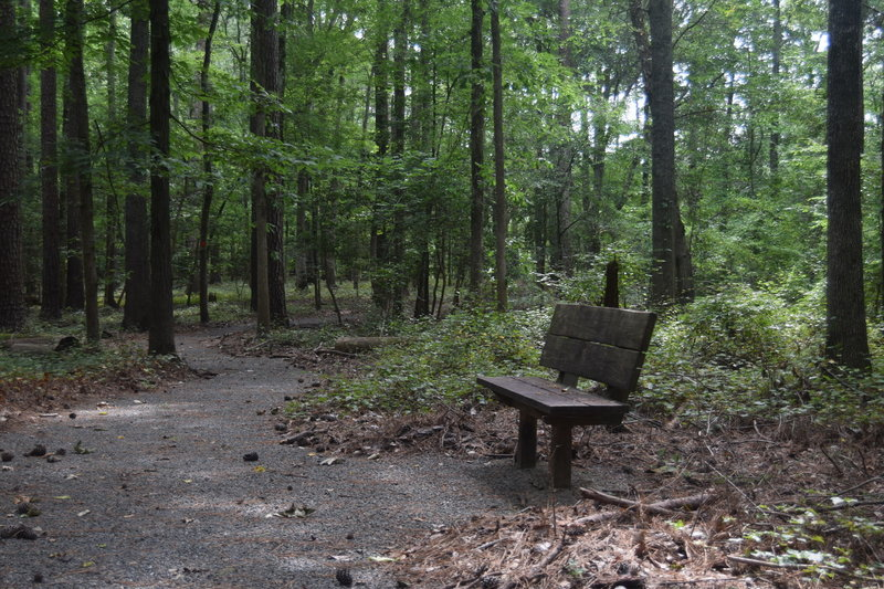 Rest stop along the Talking Tree Trail
