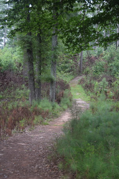 A portion of the Forest Demonstration Trail