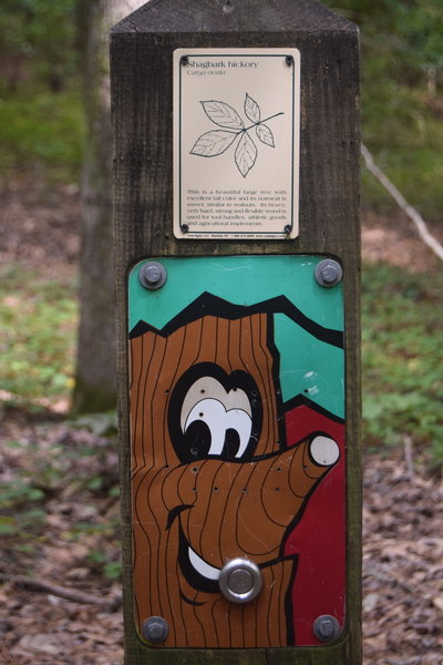 This 'talking tree' tells you about the shagbark hickory.