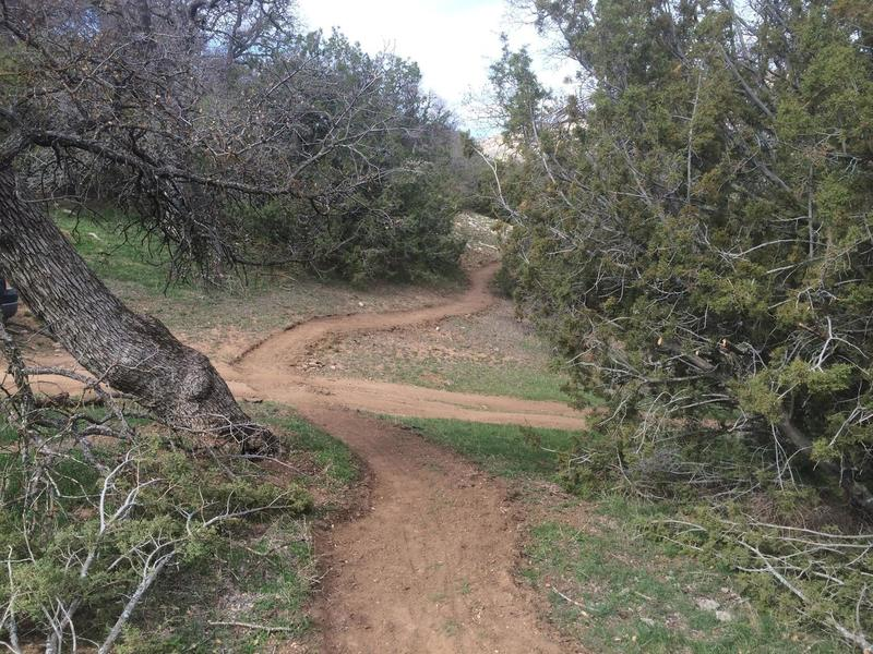 Pristine singletrack through oaks and junipers on Jane's Loop.