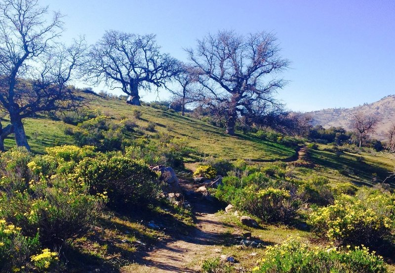 Springtime in the foothills of the Sierras.