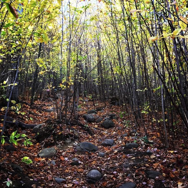 Trail has many small to medium size rocks to navigate.