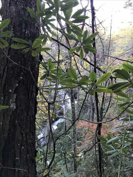 One of the many waterfalls you'll see along the Darnell Creek Horse Trail.