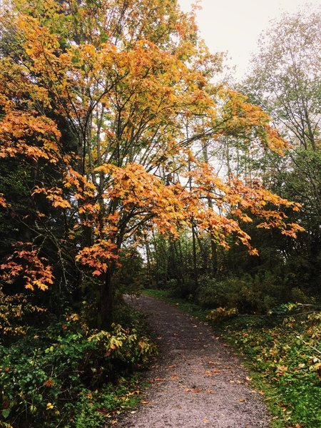 Just a touch of fall color along the Connelly Creek Trail.