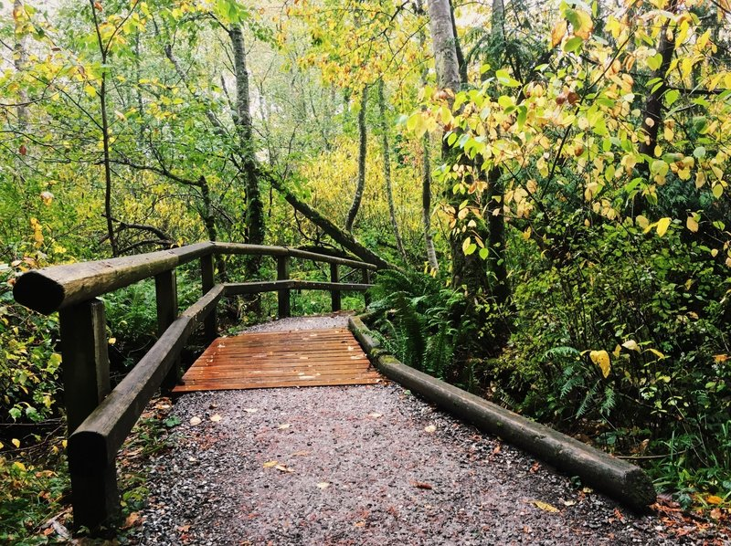 A boardwalk and shallow creek complete the experience on the Connelly Creek Trail.