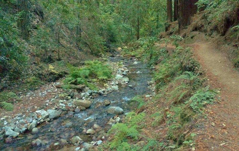 Fall Creek, along the Fall Creek Trail.
