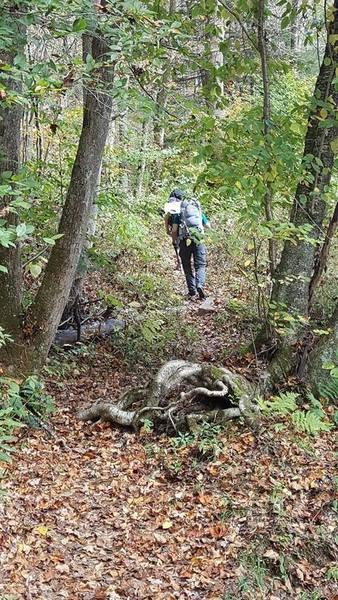 On Middlefork Trail