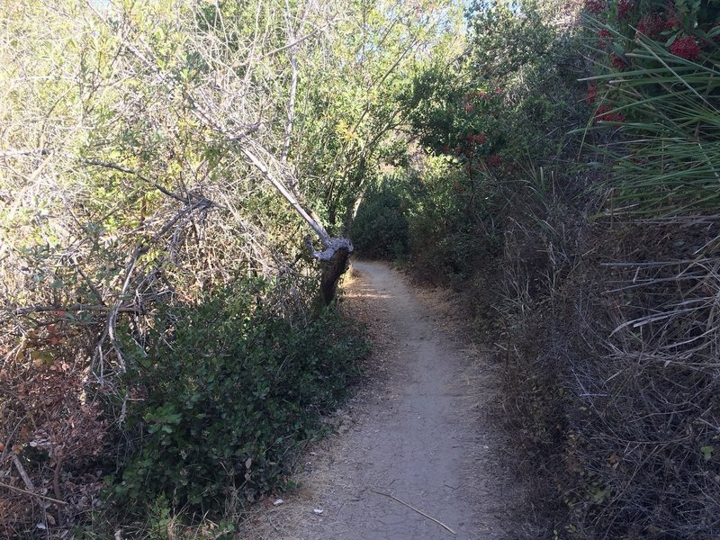 View of Buck Gully Trail during the ascent.