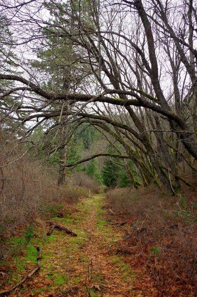 The Lone Pilot travels an avenue of trees alongside a creek
