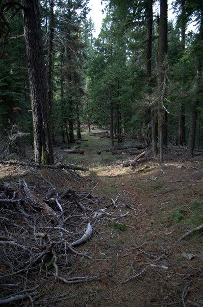 The trail follows Lone Pine Ridge to the PCT