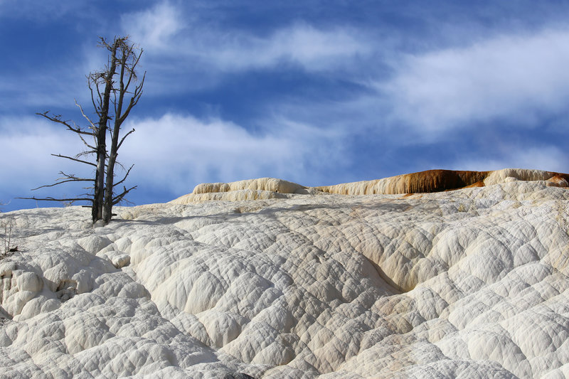North end of Mammoth Hot Springs Terraces