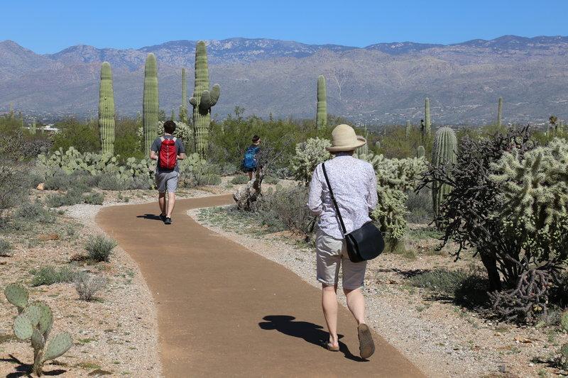 Desert Ecology Trail, Saguaro NP