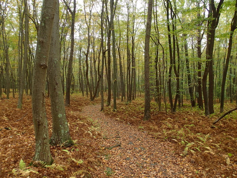 Garvey Spring Trail