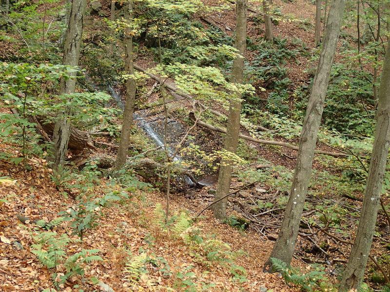 Laurel Falls, Garvey Spring Trail.