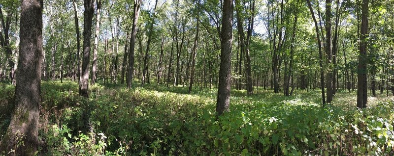 The bottomlands near the Mackinaw River offer a different landscape to explore.