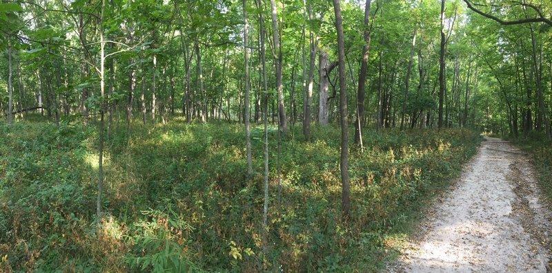 Oak and hickory savanna.