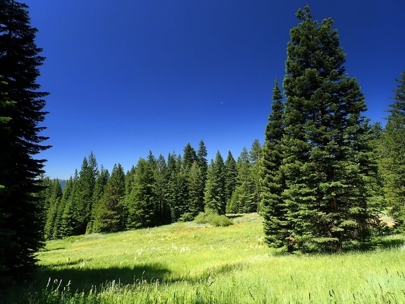 A big meadow along the Wagner Butte Trail