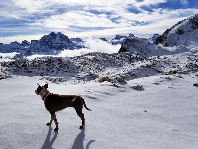 Hiking dog caught in a rare moment of stillness at Oberbolgen