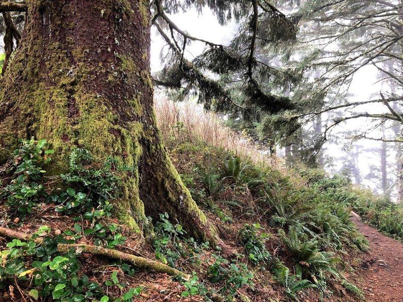 Mossy tree.