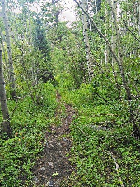 Smooth trail, West Mancos-style