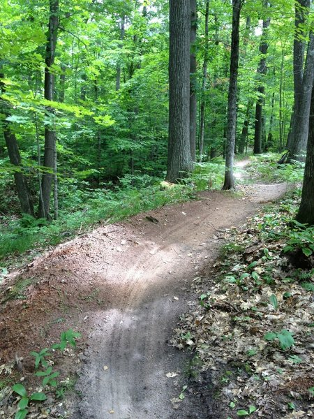 Linked berms on Twilight Zone.