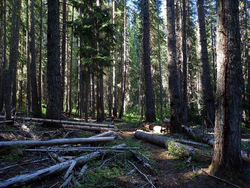 Upper South Fork Trail #988.