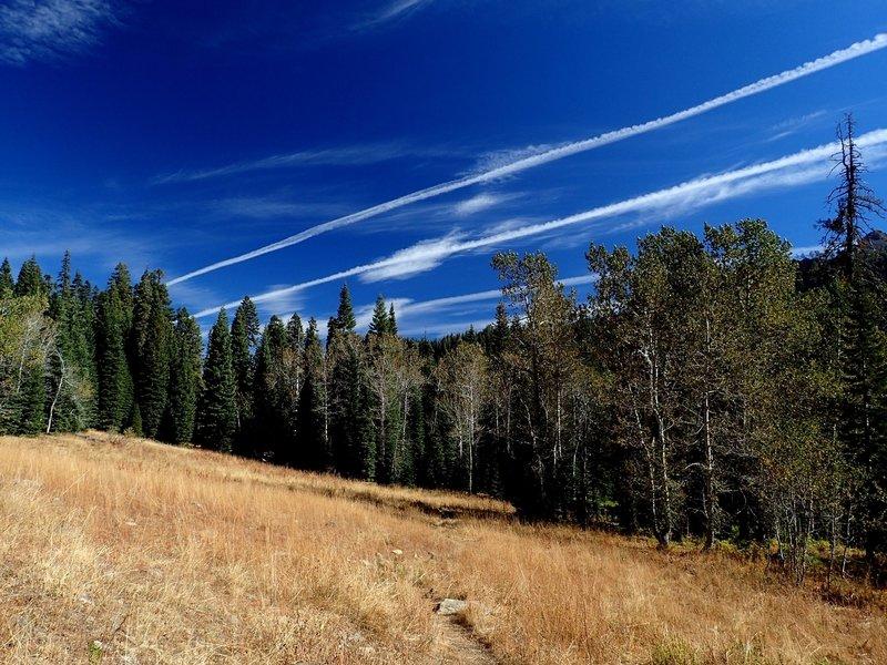 Aspen groves along the Red Rock Trail #5538