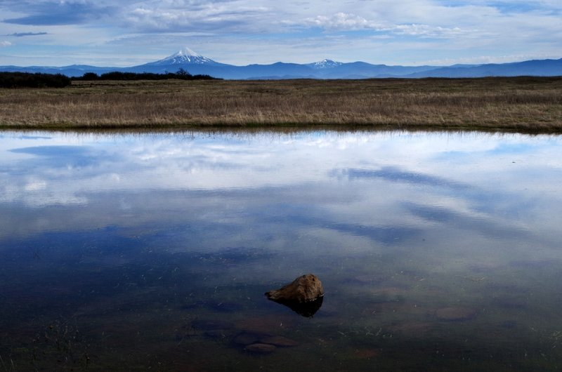 A vernal pond on Lower Table Rock with Mount McLoughlin on the horizon