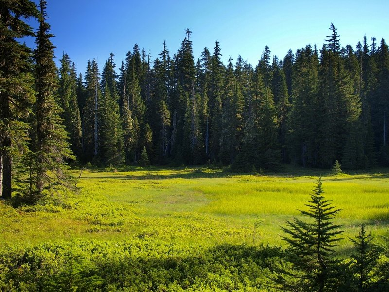 A meadow along the Thomas Lake Trail