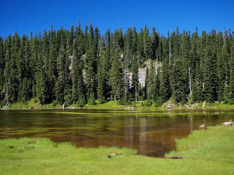 A small lake along the Indian Heaven Trail